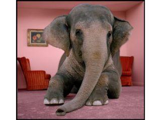 elephant-room111